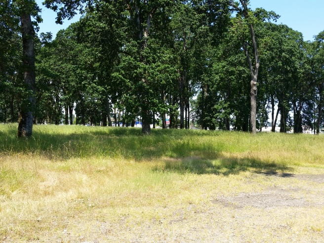 Oak Savannah at the Oregon State Fairgrounds 2015, likely location of a gather like this over 100 years ago.