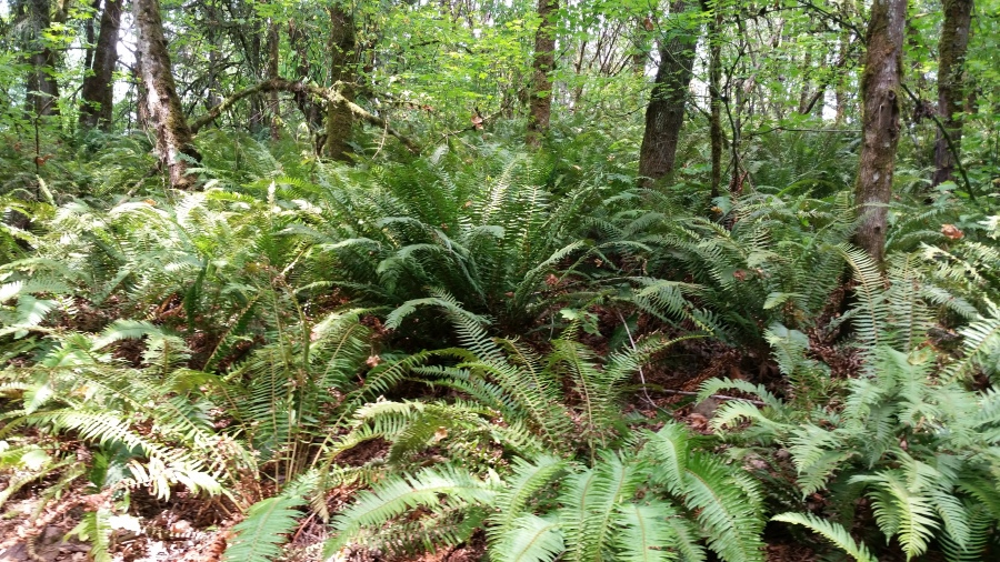 Advancing Fern (surrounded)