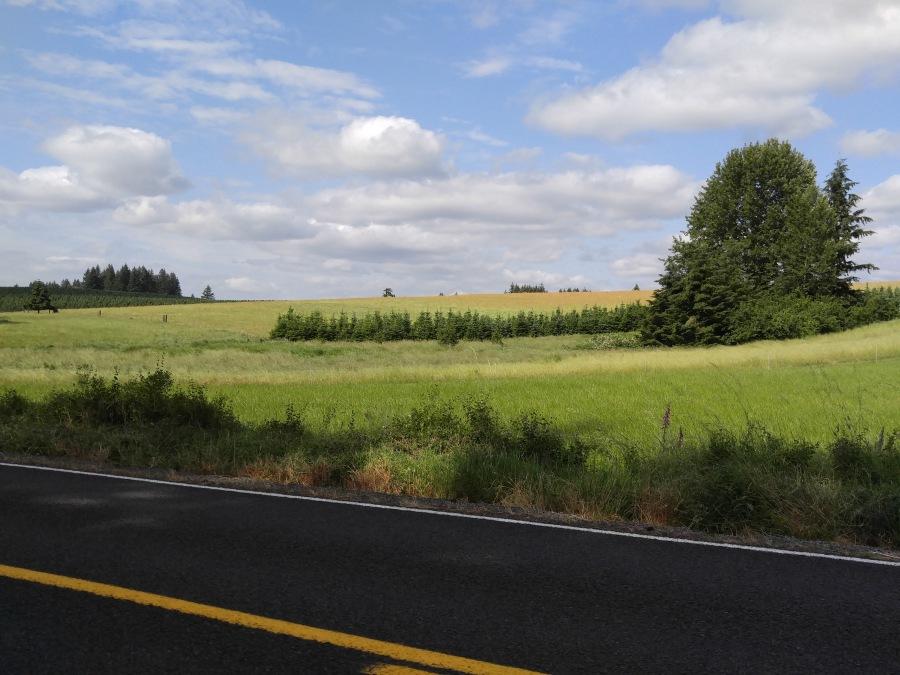 Crooked Finger Prairie June 2016, Photo David Lewis