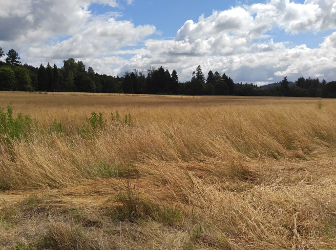 Facing south, flat grassy plain north of Champoeg, Champoeg State Park David Lewis 2016