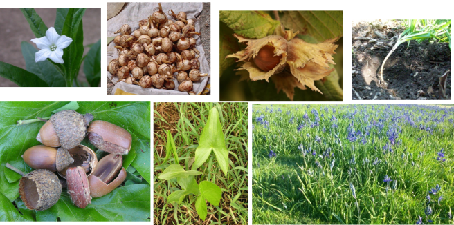 3-horticulture