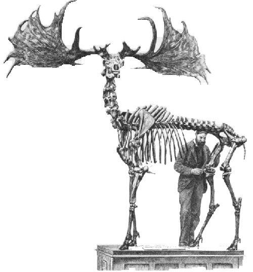 irish-elk-2