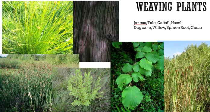 weaving-plants